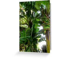 Plantain Trees Greeting Card
