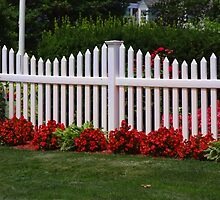 The White Picket Fence by vigor