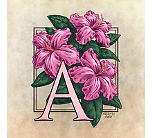 A is for Azalea - full image Photographic Print
