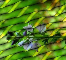 Digital Abstract in Redfield by vigor