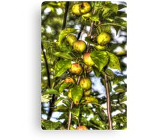 Apples For Wildlife Canvas Print
