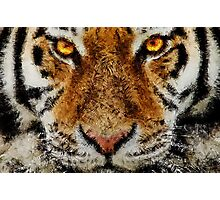 Animal Art - Tiger Photographic Print
