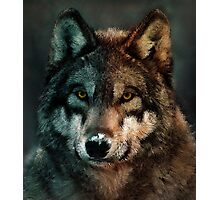 Animal Art - Wolf Photographic Print