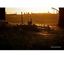 Cobweb Silhouette Photographic Print