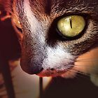 Cat eye by Tarjita