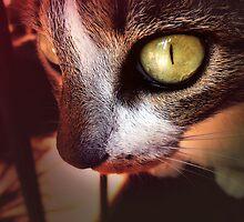 Cat eye by Tarjita