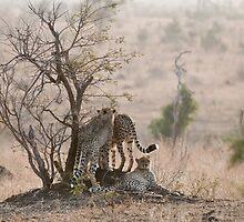 Cheetah Family by Vickie Burt