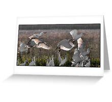Egrets  9 Greeting Card