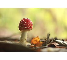 Fairy woodlands Photographic Print