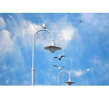 Gulls at Fisherman's Wharf Photographic Print