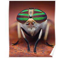 """Tabanus lineola"" Horse Fly Macro Poster"