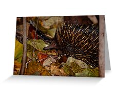 Muddy Echidna  Greeting Card