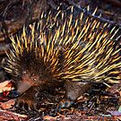 Mr Echidna - What Big Claws You Have by Bami