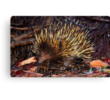 Mr Echidna - What Big Claws You Have Canvas Print