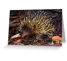 Mr Echidna - What Big Claws You Have Greeting Card
