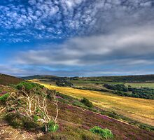 Headon Warren IOW by manateevoyager
