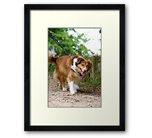 COLLIE Framed Print