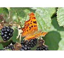 Autumnal Feast Photographic Print