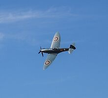 Spitfire by Paul Madden