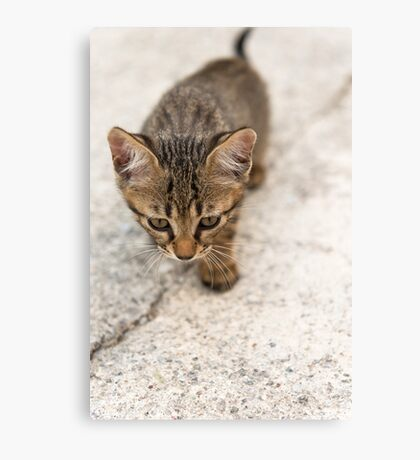 Cat puppy  Canvas Print