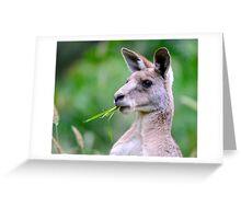 """ Portrait of Kangaroo "" Greeting Card"