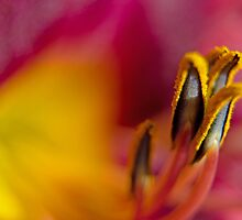 Secrets in color by photojeanic