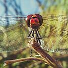 Dragonfly Stare by Janko Dragovic