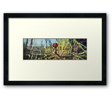 Dragonfly Stare Framed Print