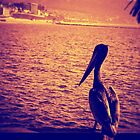 Pelican Enjoying Sunset in Redondo Beach, CA by jjbentley