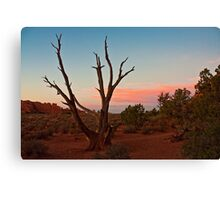 Desert Tree - Utah Canvas Print