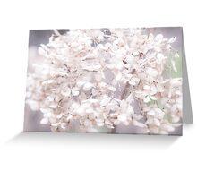 White Flower III Greeting Card