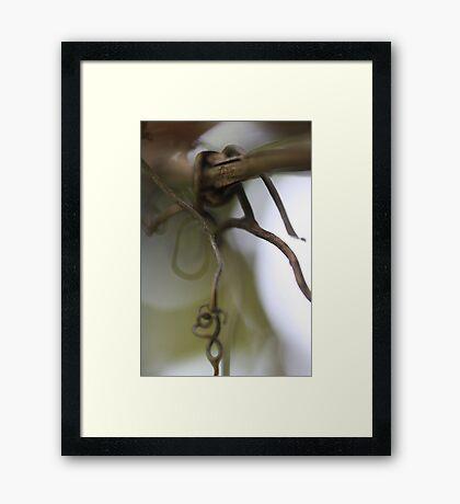 Vine (dull) Framed Print