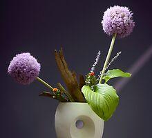 May by Dan Shalloe