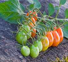 Ombre tomatoes by Nicole  McKinney
