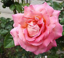 Flower Close-Up, Liberty Community Garden, Lower Manhattan, New York City by lenspiro