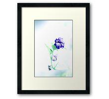 Softness of the gone beauty Framed Print
