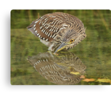 Timid reflection Canvas Print