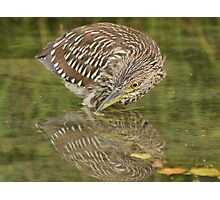 Timid reflection Photographic Print