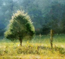 Cedar In Morning Light by Jean Gregory  Evans
