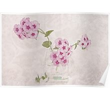 Phlox, Perfume And Lace  Poster