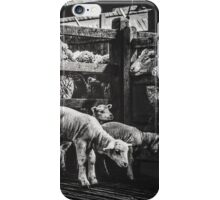 Woolshed Calendar 8 iPhone Case/Skin