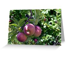 Bunch of Apples Greeting Card