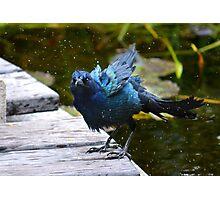 Bathing Bird Photographic Print