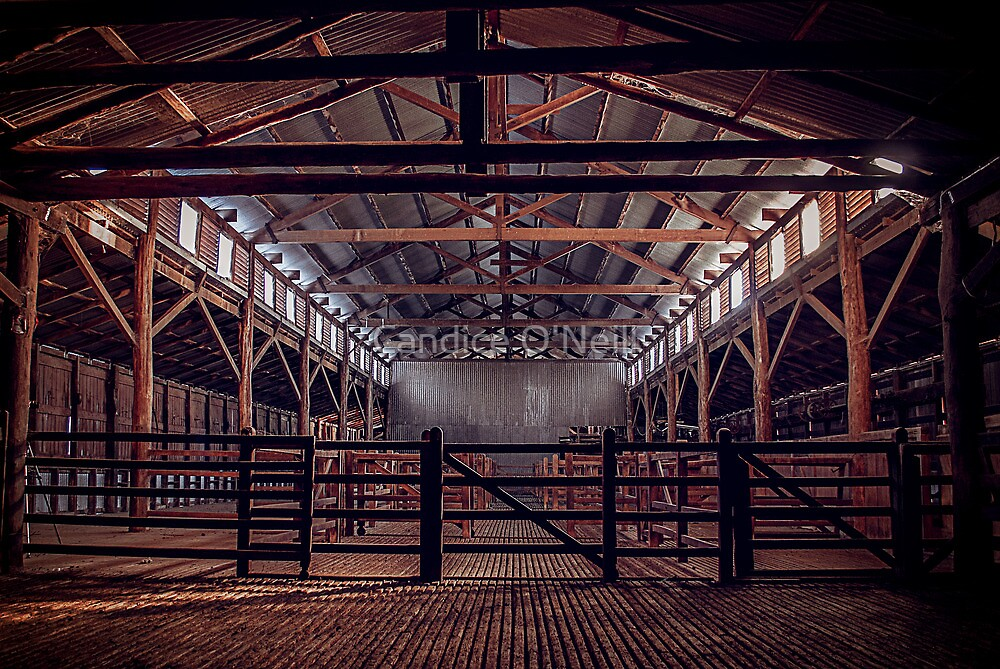 Woolshed Calendar 11 by Candice O'Neill