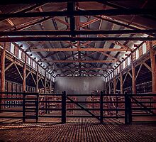 CJO Photography - Woolsheds  of 2013 by Candice O'Neill