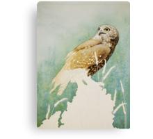 Barking Owl (Ninox connivens) - WIP Canvas Print