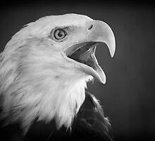 Eagle Intensity by Bob Larson