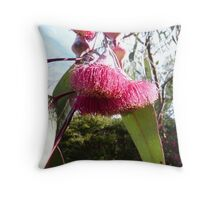 Macro of large Flowers on Eucalyptus Caesia (Silver Princess) Arilka. Throw Pillow