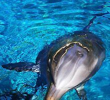 Dolphin Grin by Kerri  Crau