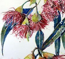 Eucalyptus gum blossoms2 by pamfox